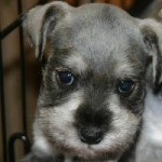 Cute Puppy - To be loved and cherished, not to be eaten